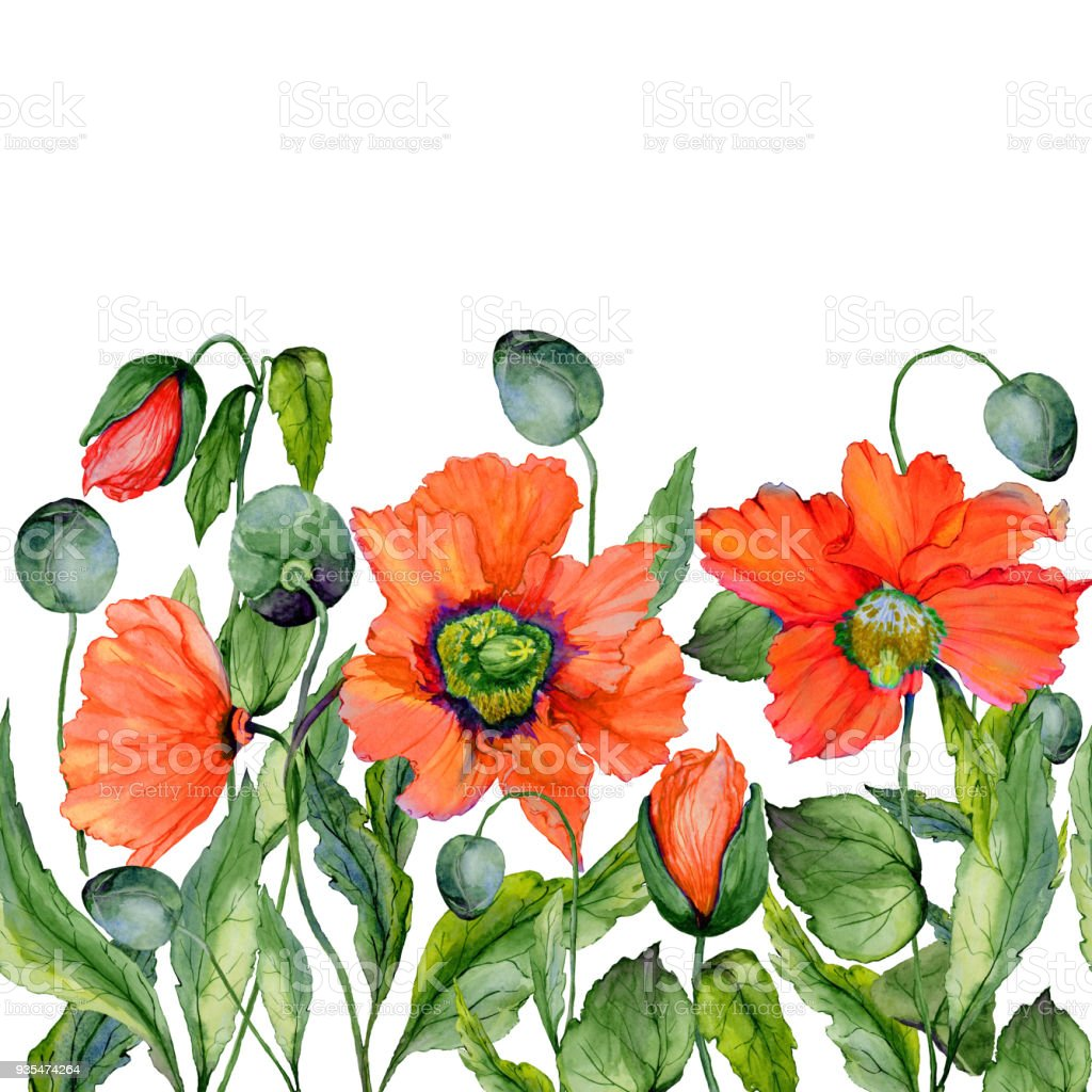 Vivid Summer Or Spring Background Beautiful Red Poppy Flowers On