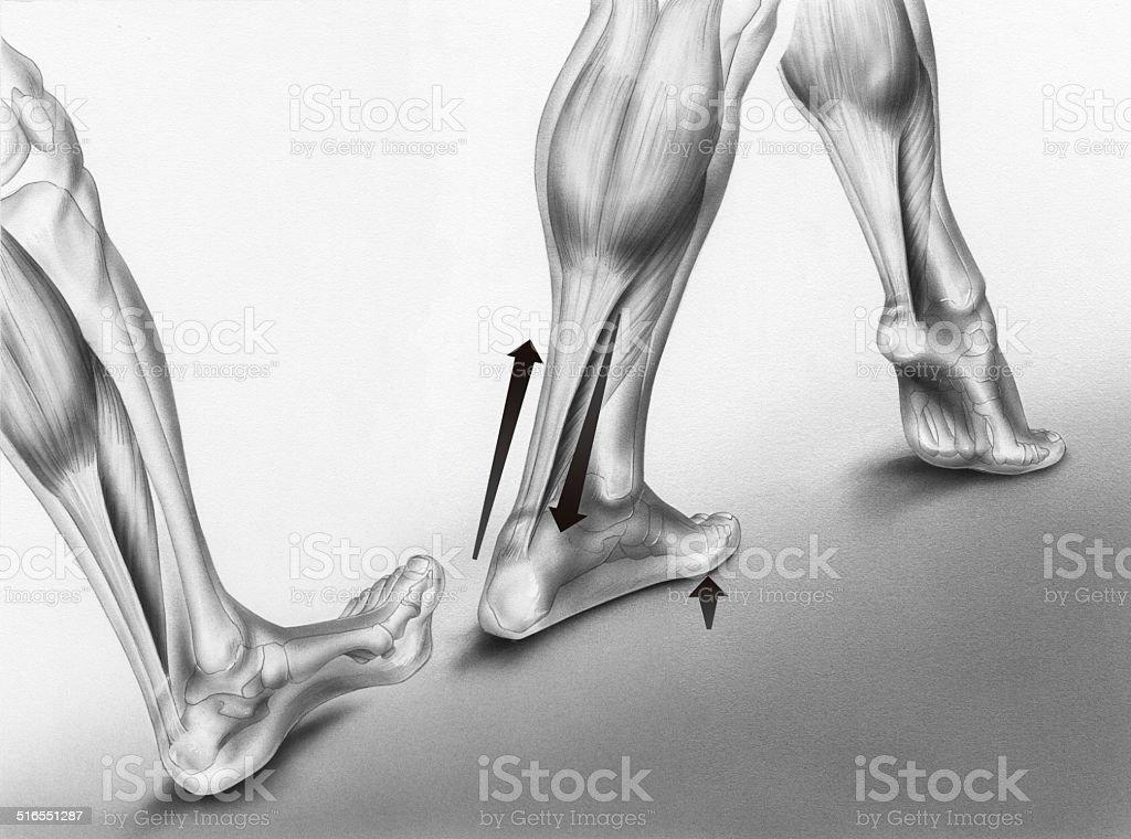 Walking Foot Strikes vector art illustration
