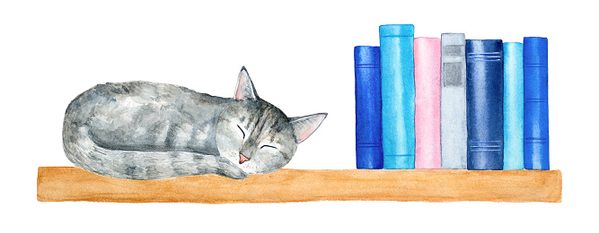 Wall wooden book shelf with little gray tabby cat taking a nap and row of reading books.