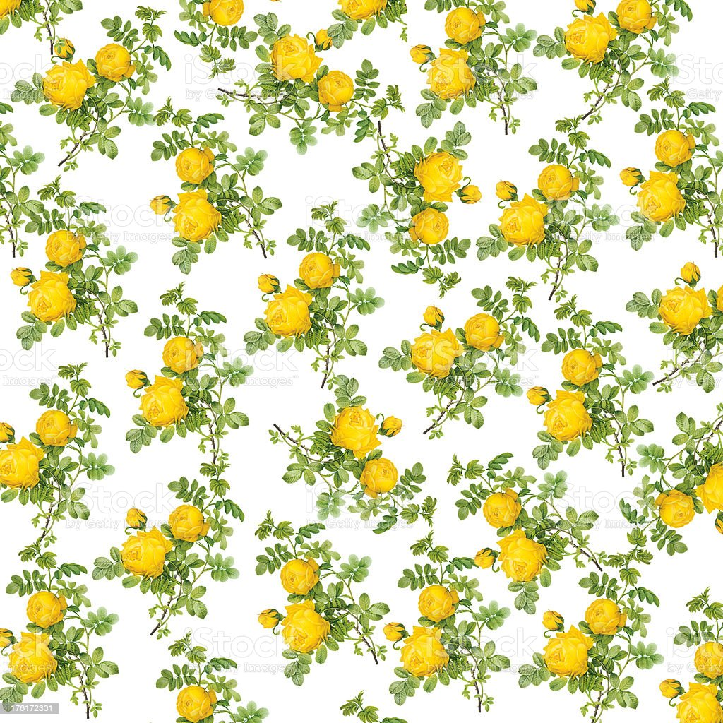 Wallpaper Of Yellow Rose: Wallpaper With Yellow Roses Antique Flower Illustrations