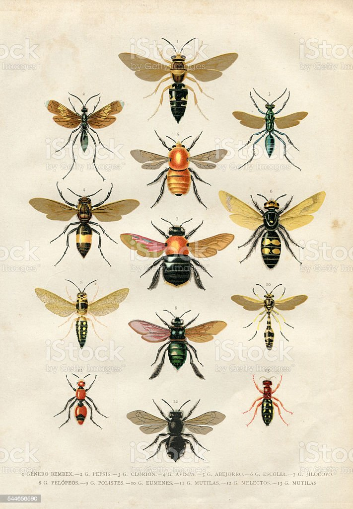 Wasp bumblebee insects illustration 1881 vector art illustration