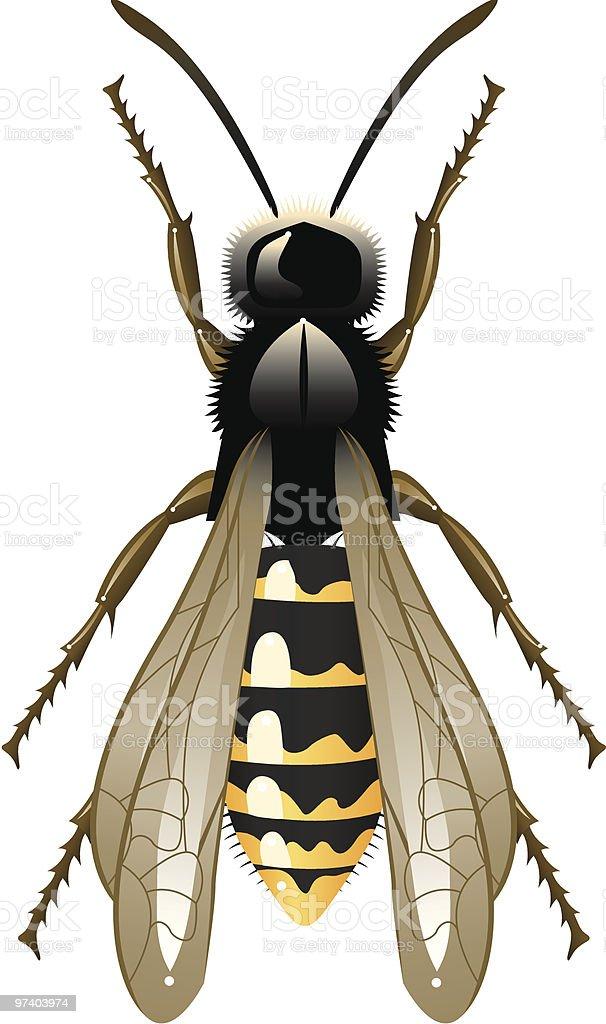 Wasp vector art illustration