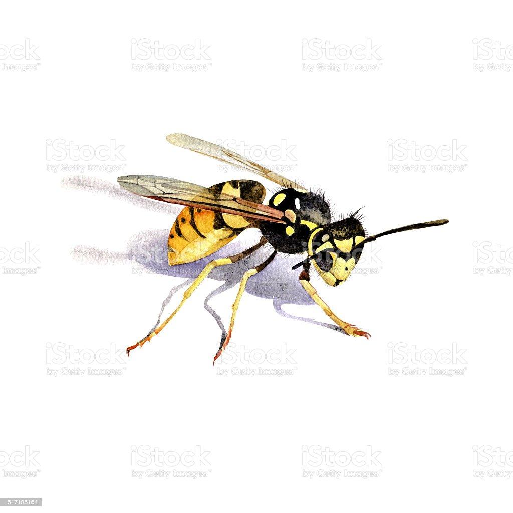 Wasp watercolor hand drawn illustration. vector art illustration