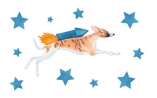 Water color illustration set with cute flying whippet dog and navy blue stars. Hand drawn watercolor graphic painting on white, cut out clipart elements for design decoration, cool stickers, poster.