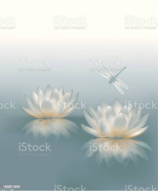 Water lily background illustration id163821856?b=1&k=6&m=163821856&s=612x612&h=mlpu7herohdfwz1nhalspetmyee0b6wxzgrrbaeqwt8=