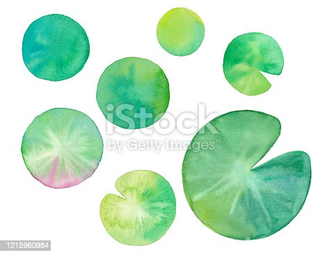 Water lily leaf watercolor illustration trace vector