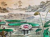 Water lily victoria regia