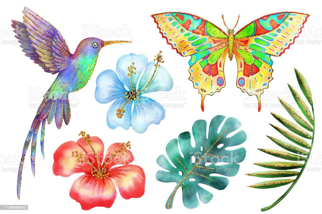 watercolor-and-gold-tropical-flowers-leaves-hummingbird-butterfly-set-illustration-id1139489540
