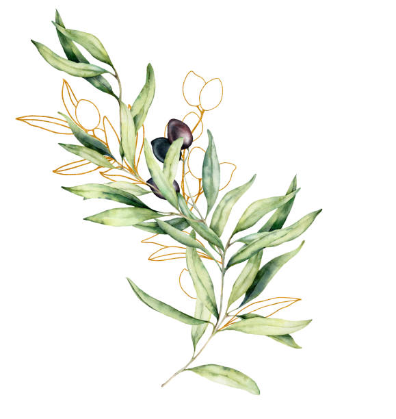 illustrazioni stock, clip art, cartoni animati e icone di tendenza di watercolor and golden sketch card with olive, leaves and branch. hand painted floral illustration isolated on white background for design, print, fabric or background. - verde cachi