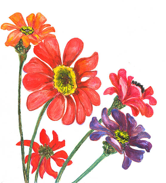 Royalty Free Zinnia Clip Art, Vector Images ...