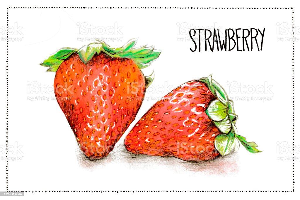 手書きイチゴとイチゴの水彩と鉛筆のイラスト イチゴの