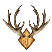 istock Watercolor antlers on wooden board 1263358307