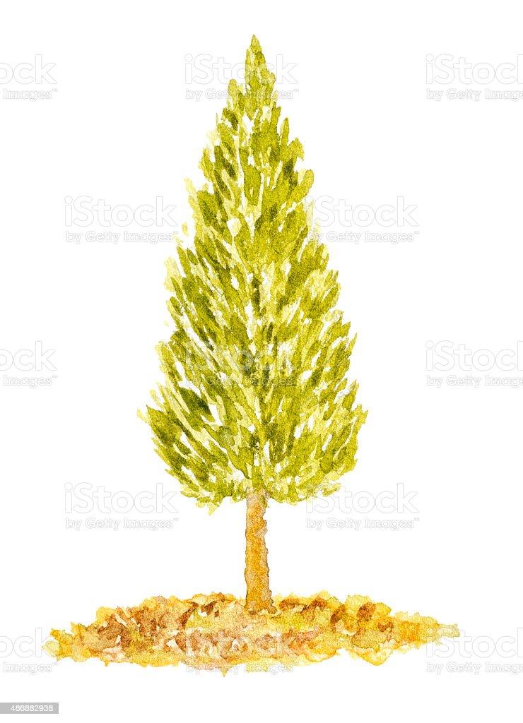 Acquerello Arborvitae di albero disegno a mano e dipinti - illustrazione arte vettoriale