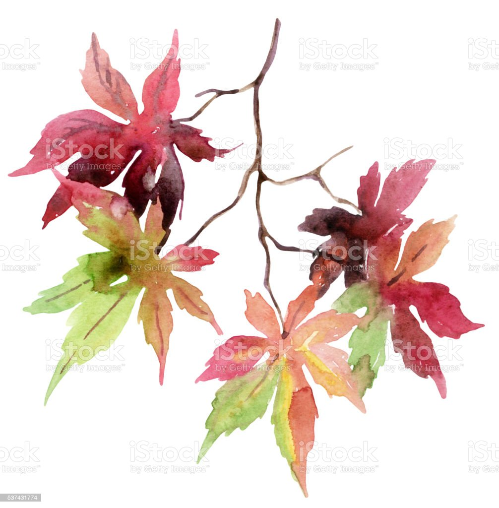 Watercolor autumn branch with colorful leaves vector art illustration