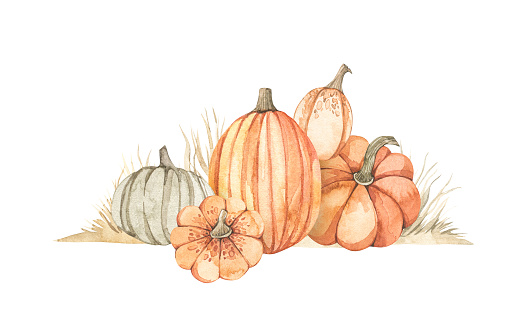 Watercolor Autumn harvest illustrations with pumpkins and yellow grass. Fall elements. Perfect for invitations, greeting cards, posters, prints, social media