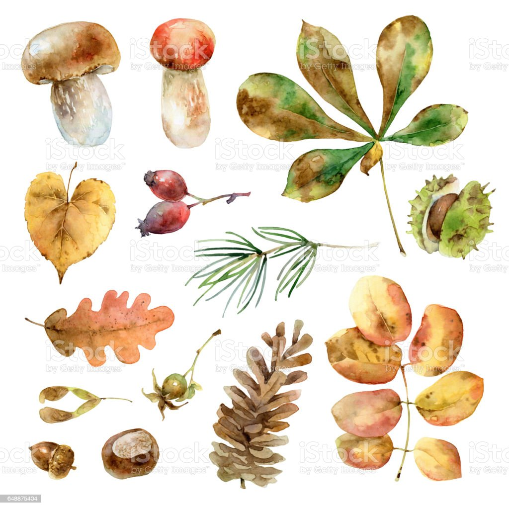 Watercolor autumn set vector art illustration
