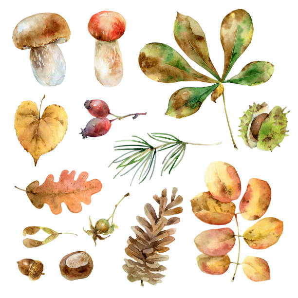 Watercolor autumn set vector art illustration