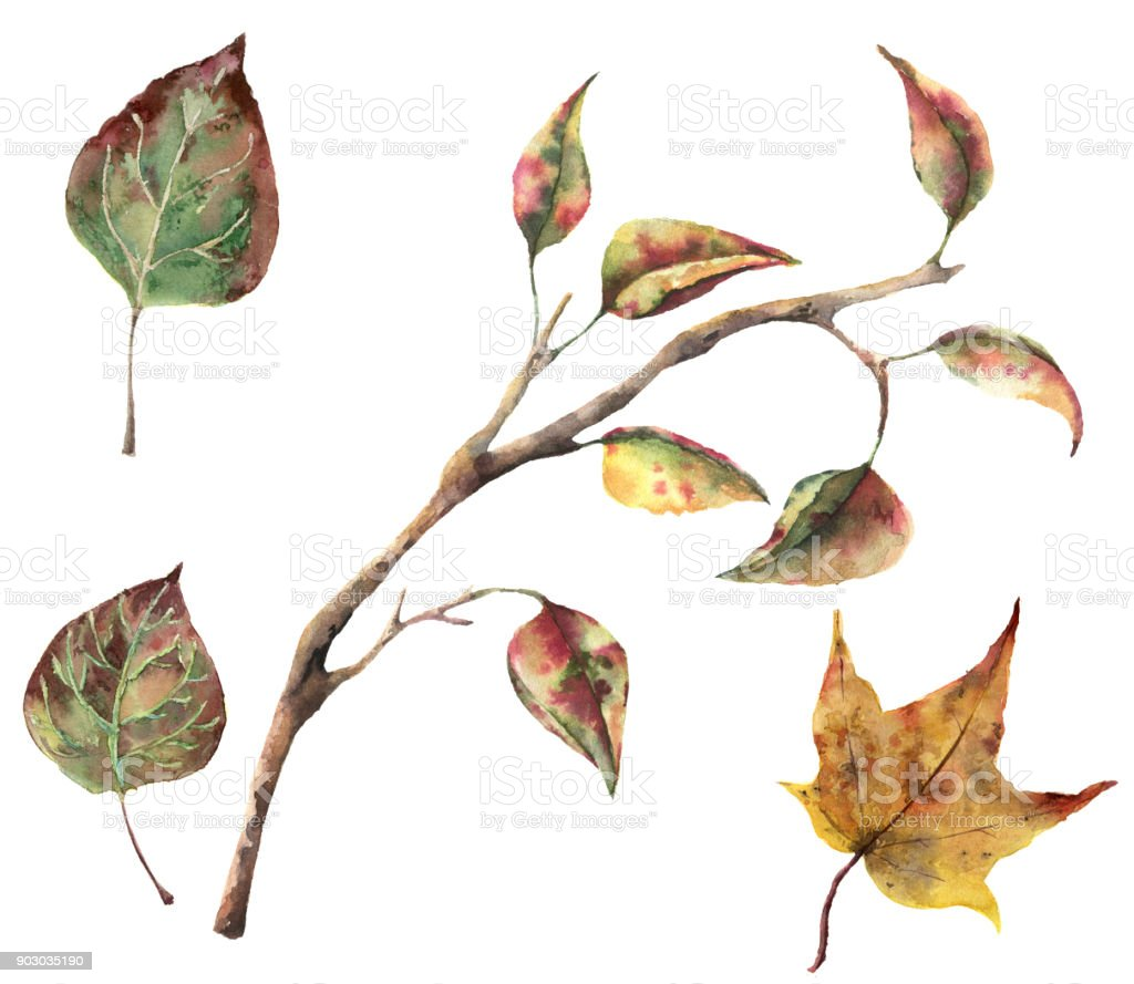 Watercolor autumn set with tree branches and fall leaves. Hand painted autumn clip art isolated on white background for design, fabric or print. vector art illustration