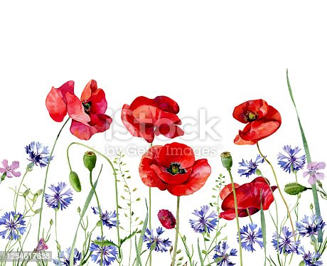 Watercolor background of scarlet poppies and cornflowers. .For congratulations, invitations, weddings, birthday, anniversary