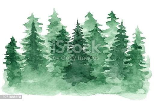 Beautiful watercolor background with green coniferous forest. Mysterious fir or pine trees illustration for winter Christmas design, isolated on white background
