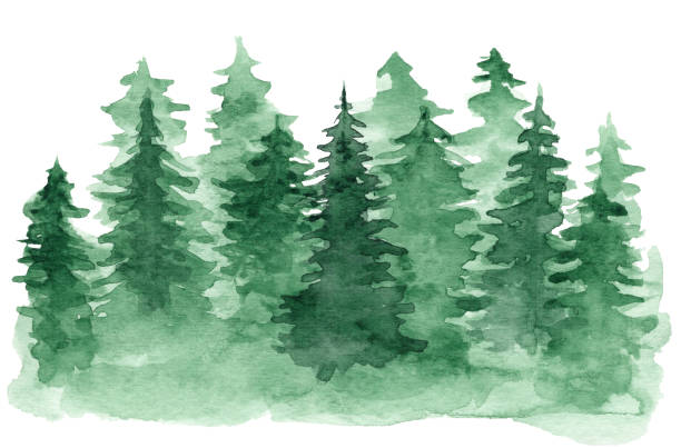 Watercolor background with green coniferous forest Beautiful watercolor background with green coniferous forest. Mysterious fir or pine trees illustration for winter Christmas design, isolated on white background woodland stock illustrations