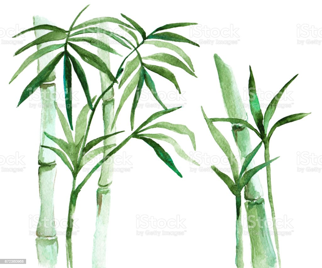 Watercolor bamboo illustration vector art illustration