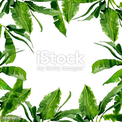 istock Watercolor banana palm leaves frame pattern. 1318150172