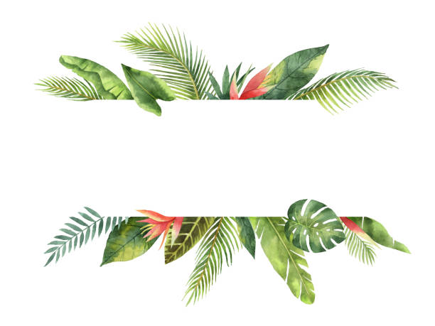 Watercolor banner tropical leaves and branches isolated on white background. Watercolor banner fruit orange branch isolated on white background. Illustration for design wedding invitations, greeting cards, postcards. Spring or summer flowers with space for your text. hawaiian culture stock illustrations