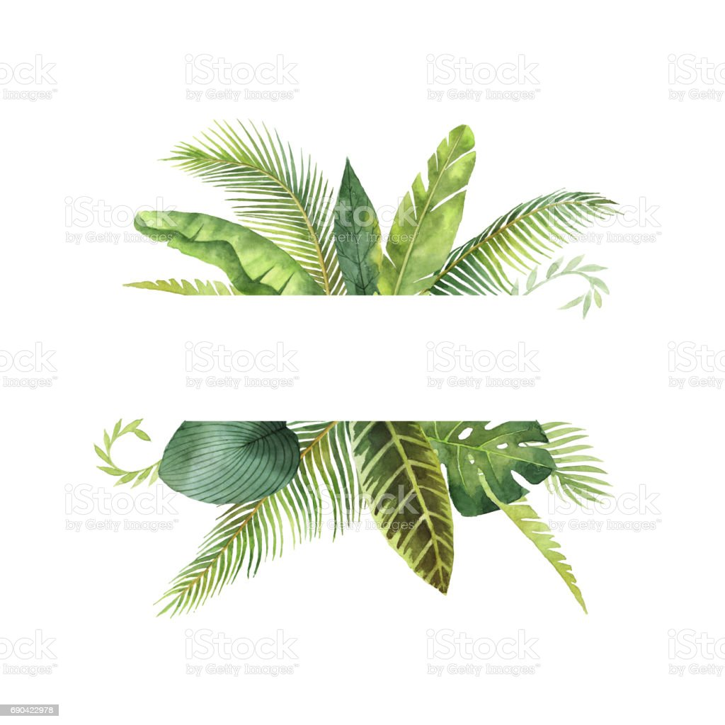 Watercolor banner tropical leaves and branches isolated on white background. vector art illustration
