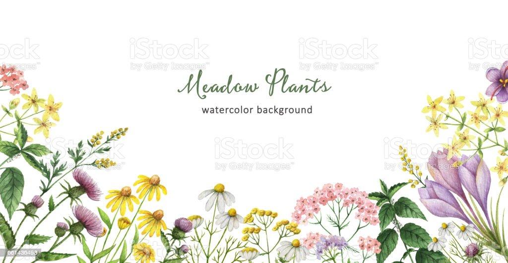 薬用植物と水彩のバナー。 ベクターアートイラスト