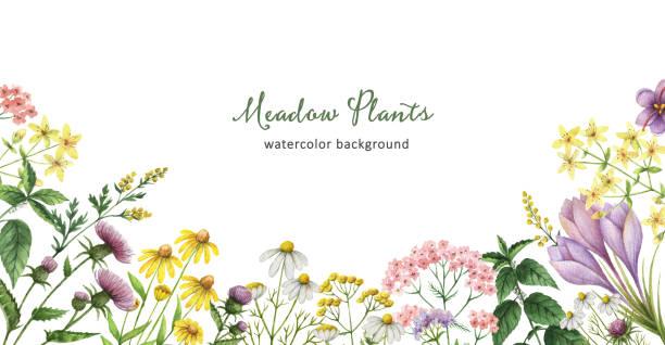 薬用植物と水彩のバナー。 - 薬草点のイラスト素材/クリップアート素材/マンガ素材/アイコン素材