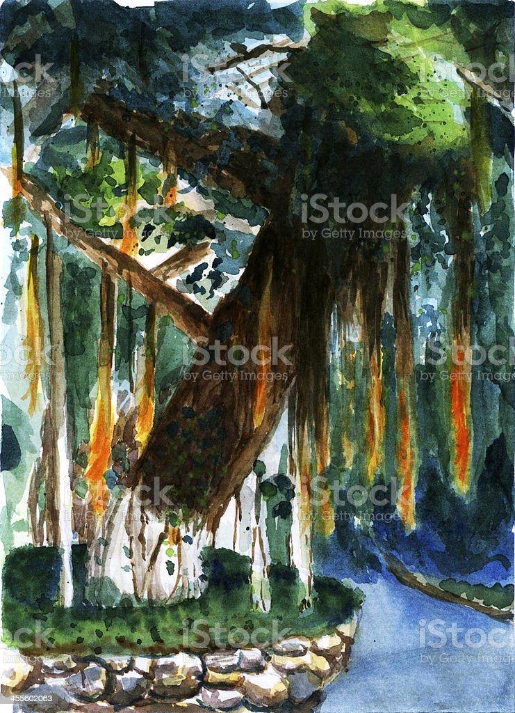 watercolor banyan painting vector art illustration