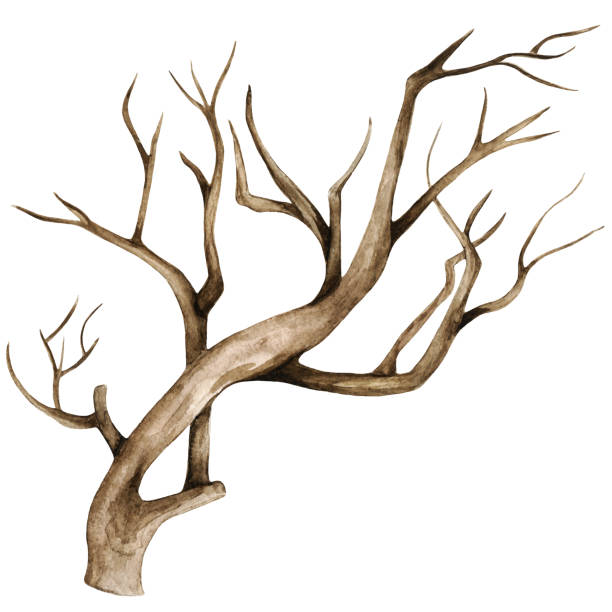 Top 60 Burnt Tree Trunk Clip Art Vector Graphics And Illustrations