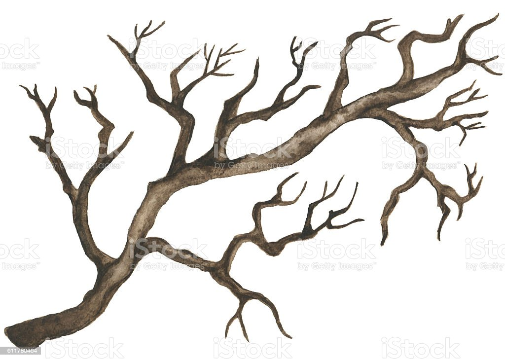 Watercolor bare tree vector art illustration