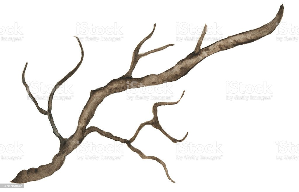 Watercolor bare tree, snag vector art illustration