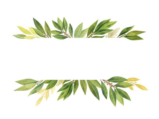 ilustrações de stock, clip art, desenhos animados e ícones de watercolor bay leaf isolated on white background. - mediterranean food