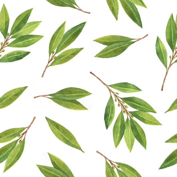 watercolor bay leaf seamless pattern of flowers and leaves isolated on white background. - laurel leaf stock illustrations, clip art, cartoons, & icons