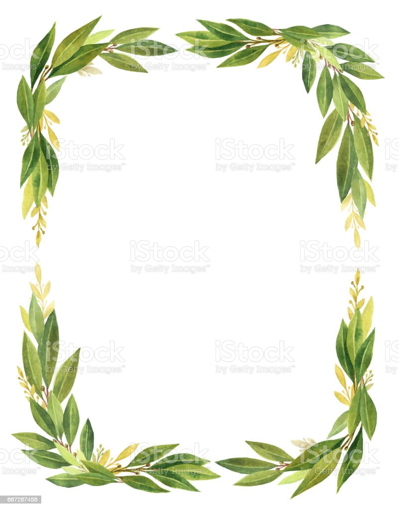 Watercolor Bay leaf vertical rectangular wreath isolated on white background. vector art illustration
