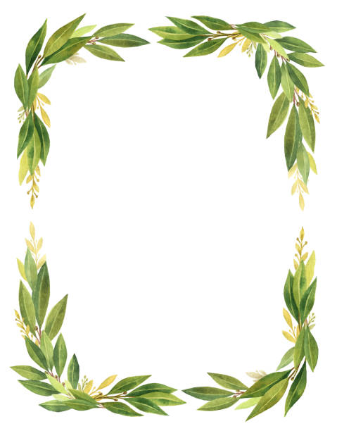 watercolor bay leaf vertical rectangular wreath isolated on white background. - laurel leaf stock illustrations, clip art, cartoons, & icons