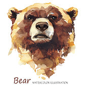 Watercolor bear on the white background. Forest animal. Wildlife art illustration. Can be printed on T-shirts, bags, posters, invitations, cards, phone cases, pillows