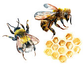 Watercolor bee, bumble bee and honeycomb set