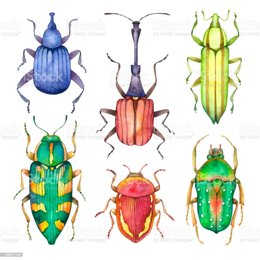 Watercolor beetles insect isolated on white background animal bugs