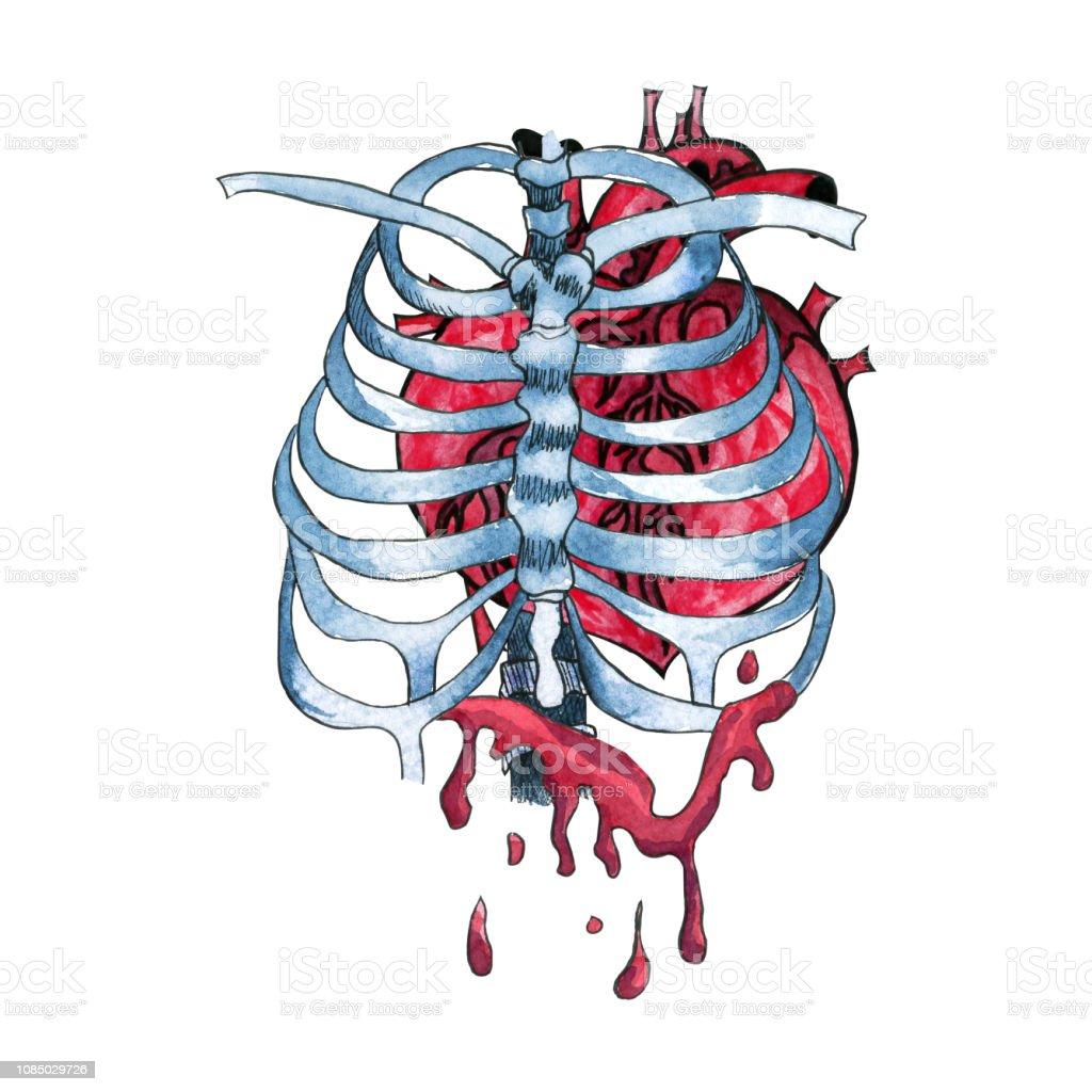 Suluboya Iskelet Kemikleri Icinde Insan Kalbi Kaniyor Alisilmadik