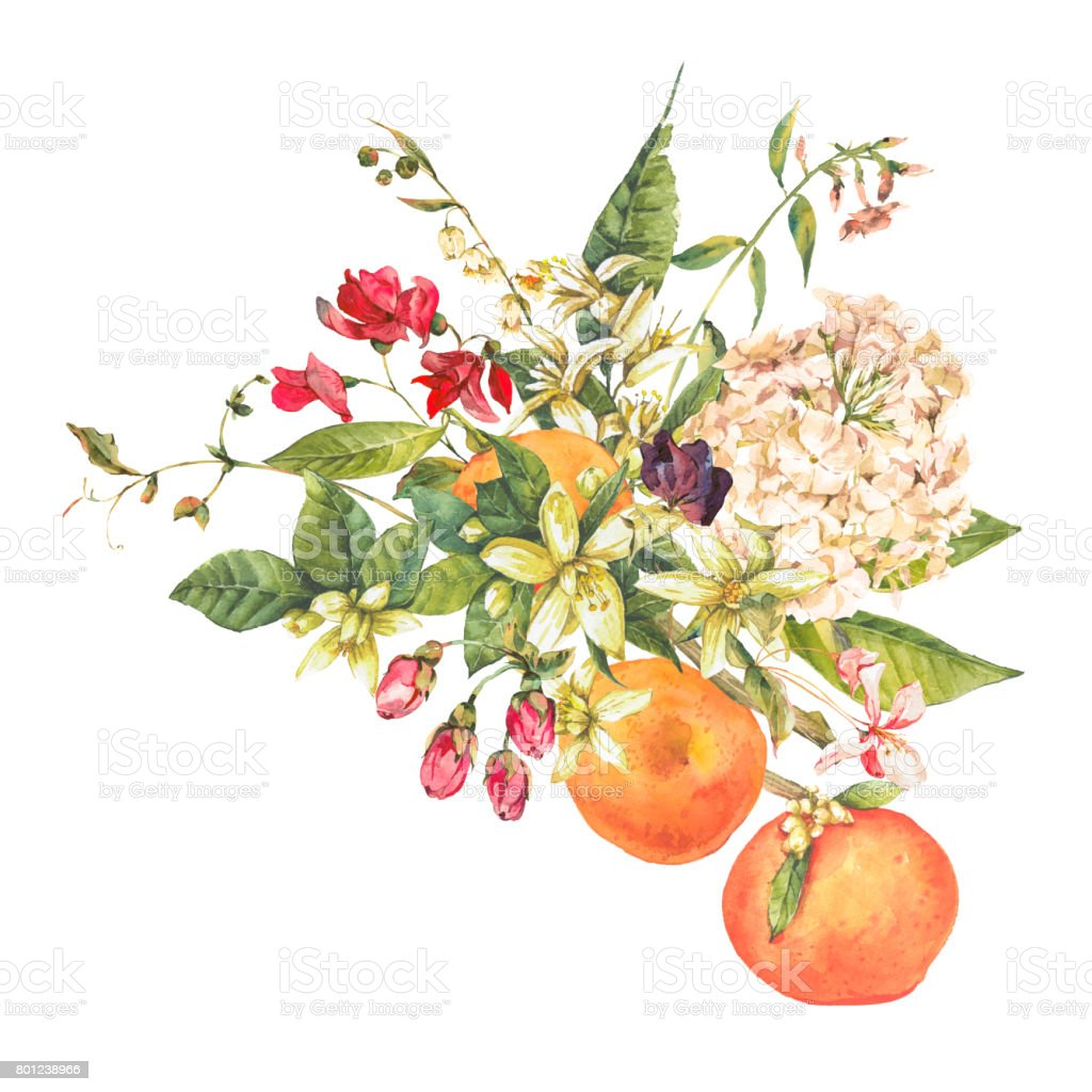 Watercolor blooming orange twig with flowers vector art illustration