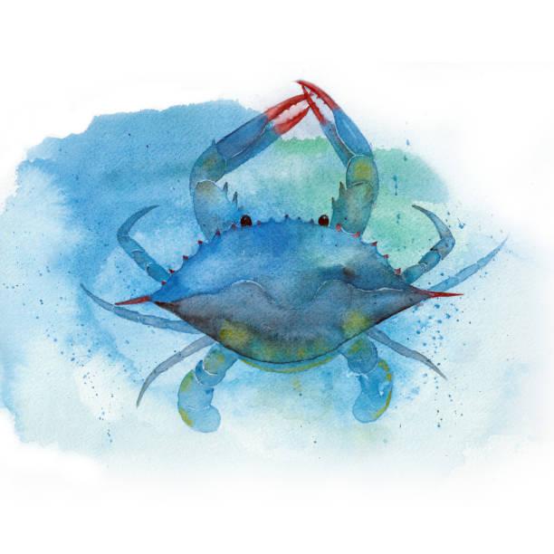 stockillustraties, clipart, cartoons en iconen met aquarel blauwe krab - blauwe zwemkrab