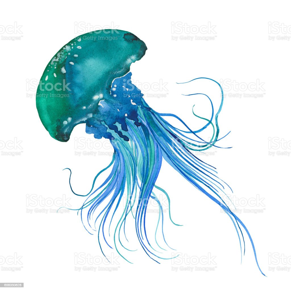 royalty free jellyfish clip art  vector images Jellyfish Clip Art Free Jellyfish Clip Art Free