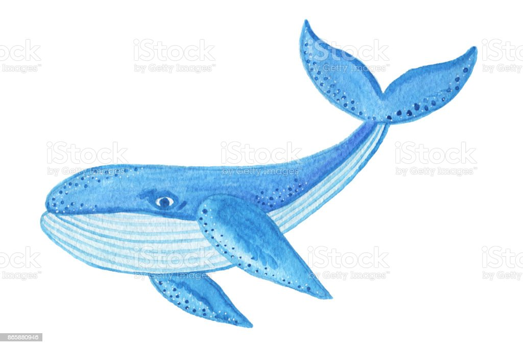 how to draw a blue whale cartoon