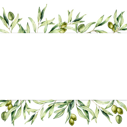 Watercolor Border With Green Olive Berries And Branch Hand ...