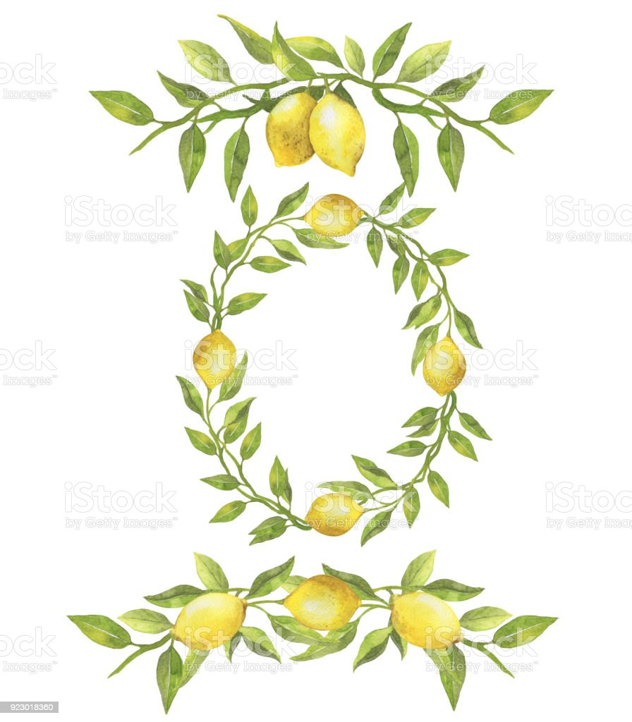 Watercolor Borders And Wreath Made Of Handdrawn Lemons And Green Leaves Botanical Illustration