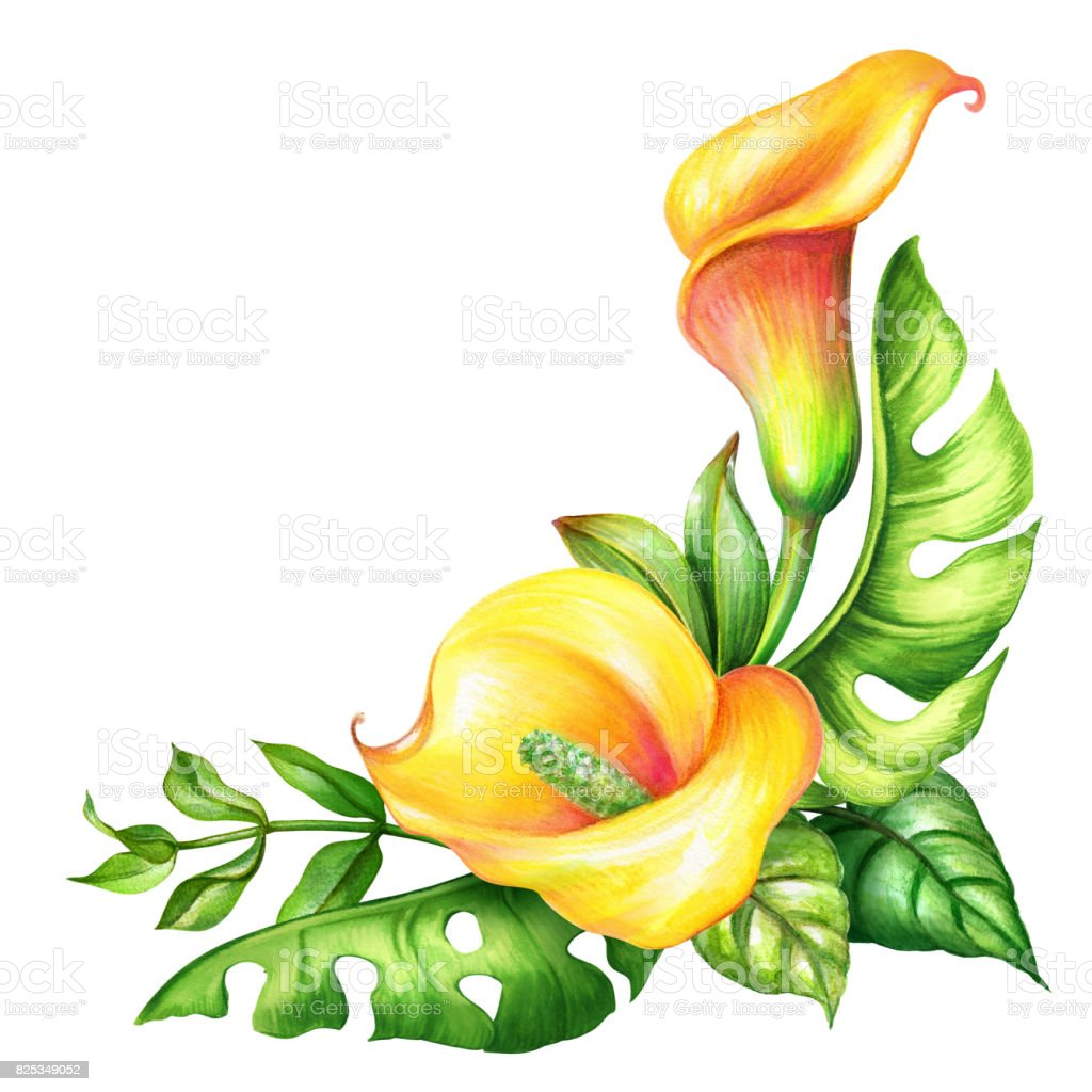 Watercolor Botanical Illustration Wild Yellow Tropical Flowers